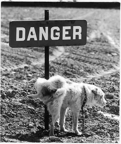 Veszély  © René Maltête