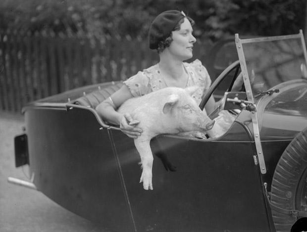 Mrs C Wylds behind the wheel with her pet pig at Terling in Essex. Fox Photos/Getty Images