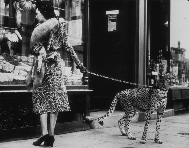 Phyllis Gordon és a leopárd<br />
