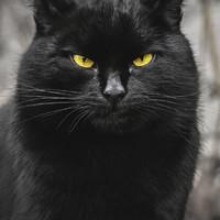Vilnius macskái