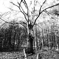 Háztáji biodiverzitás • Kertelés nélkül