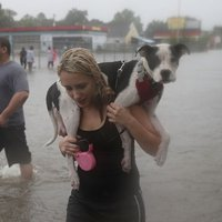 Houston víz alatt - Képgaléria
