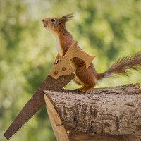 Mókuska, mókuska, felmászott a fára