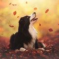 Kutya egy ősz ez