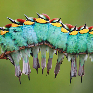 A madarak ilyenkor összebújnak