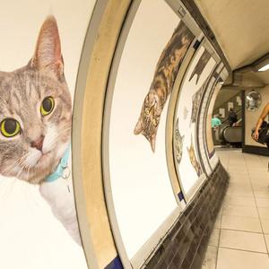Macskák a metróban, iszonyat menőség Londonban!