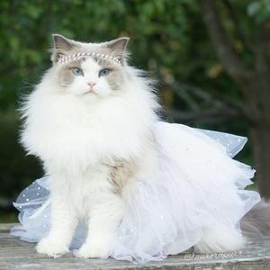 Aurora, a hercegnő