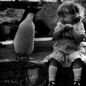 Lepkevadászat pingvin módra