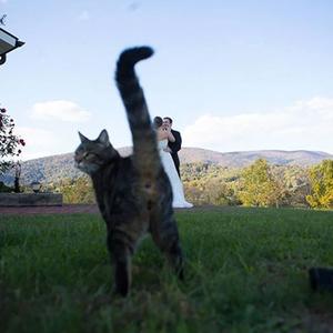 Ez egy tök jó kép lett volna, csaaak! - hogy a macska rúgja meg!