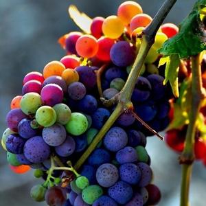 Anti aging szőlővel