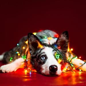 Állati boldog karácsonyt kívánunk!