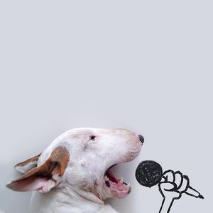 A kutya, aki a Jimmy Choo névre hallgat
