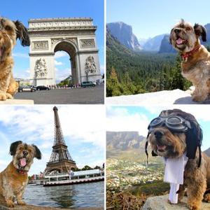 Oscar, a világjáró kutya