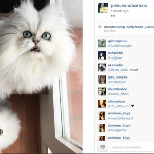 Cat love: Őket kövesd az Instán idén