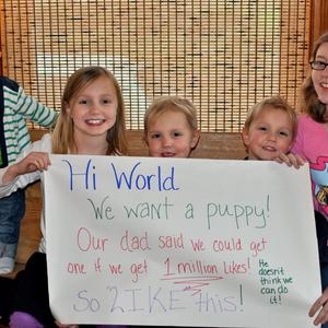 Kutyát szeretnénk, kérünk egy lájkot!