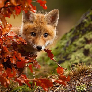 Őszi állatkák
