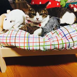A macskák esete az Ikeával