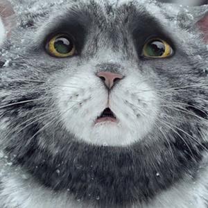 Mog macsek karácsonya