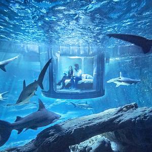 Éjszakáznál cápák között?
