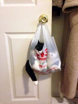 Amikor a macska...
