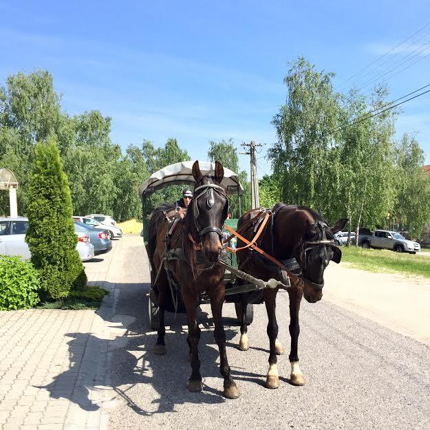 aph_lovaskocsis.jpg