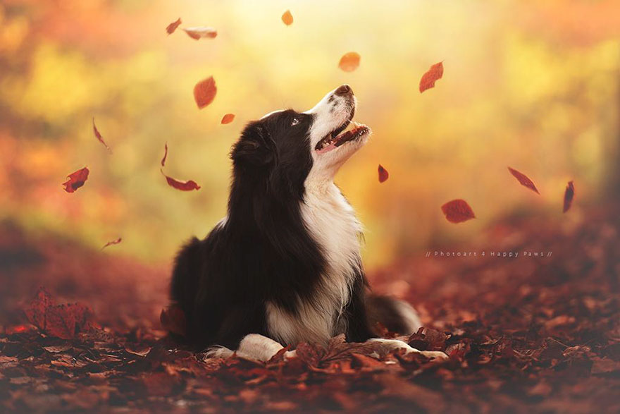 autumn-dog-photography-anne-geier-1.jpg