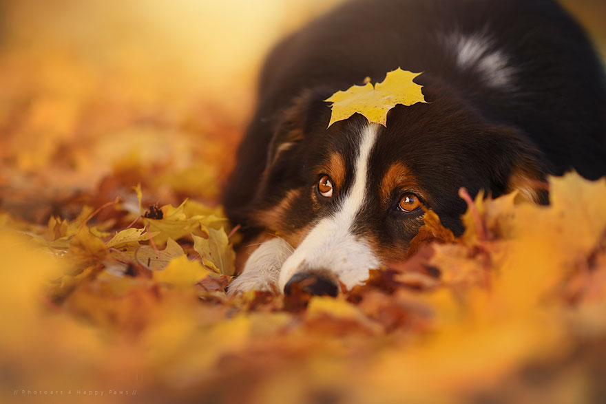 autumn-dog-photography-anne-geier-12.jpg