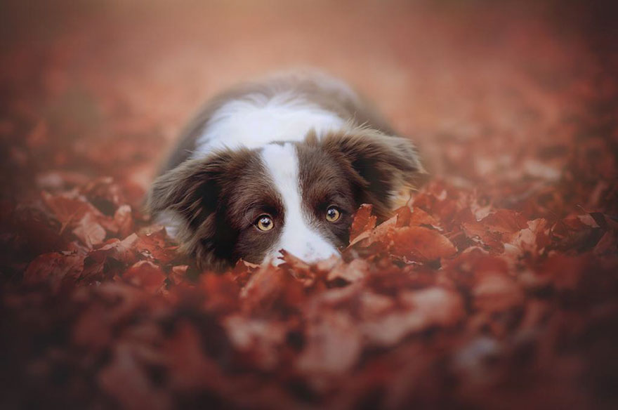 autumn-dog-photography-anne-geier-17.jpg