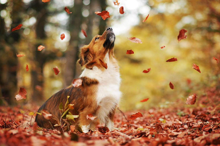 autumn-dog-photography-anne-geier-18.jpg