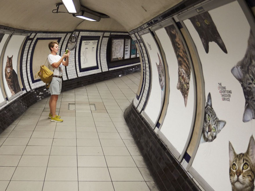 cat-ads-underground-subway-metro-london-1.jpg