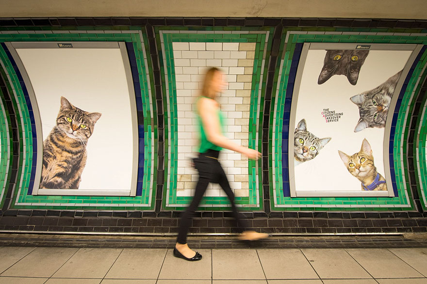 cat-ads-underground-subway-metro-london-11.jpg