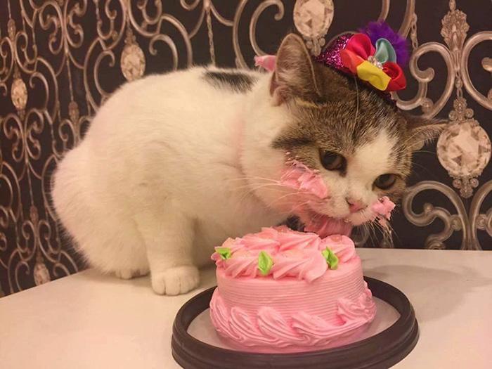 cat-eats-cake-1.jpg