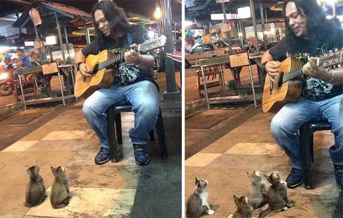 cats-listening-music-street-musician-jass-pangkor-buskers-malaysia-2.jpg