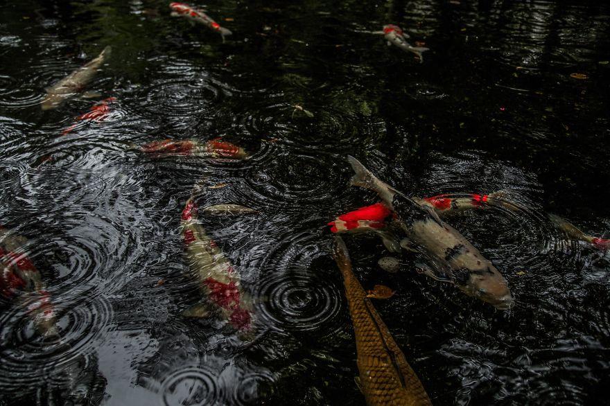 emotional-some-views-of-japans-rainy-season-576d1d650635f_880.jpg