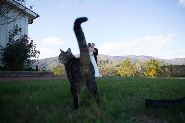 funny-cat-photobombs-58e234c4ba474_605.jpg
