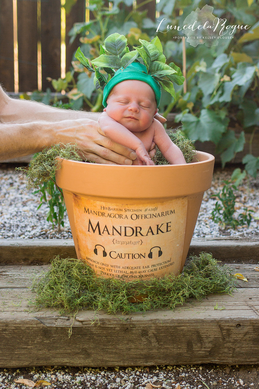 harry-potter-themed-newborn-photography-kelsey-clouse-1.jpg
