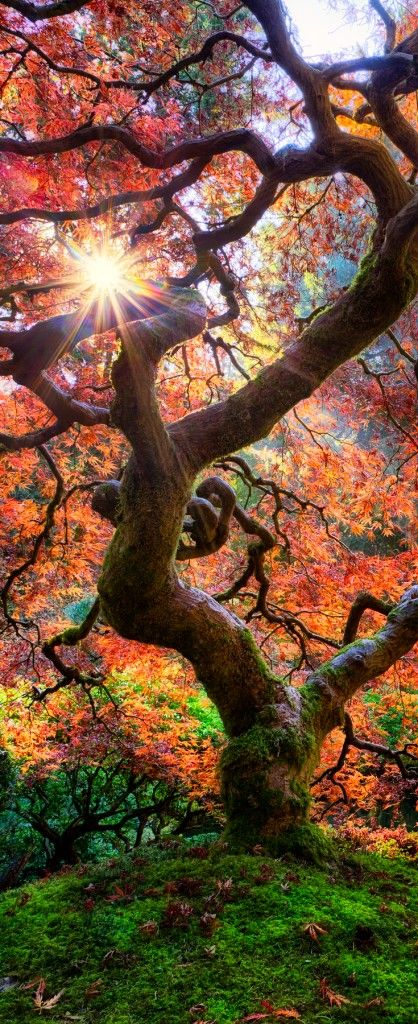 magic_tree.jpg