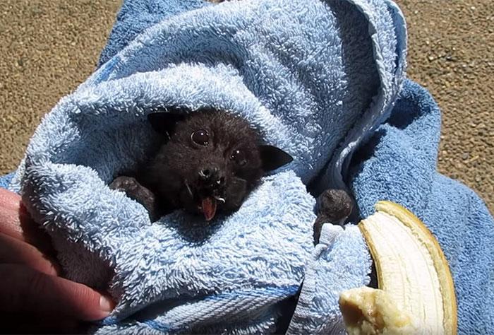 Fekete péntek után nézzetek meg egy cuki fekete batot!