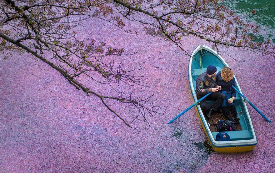sakura-cherry-blossom-drone-photography-danilo-dungo-japan-13.jpg