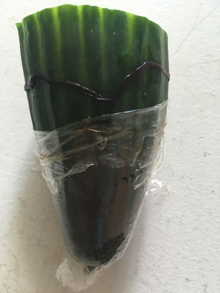 tesco-cucumber-worm-funeral-wes-metcalfe-2_1.jpg