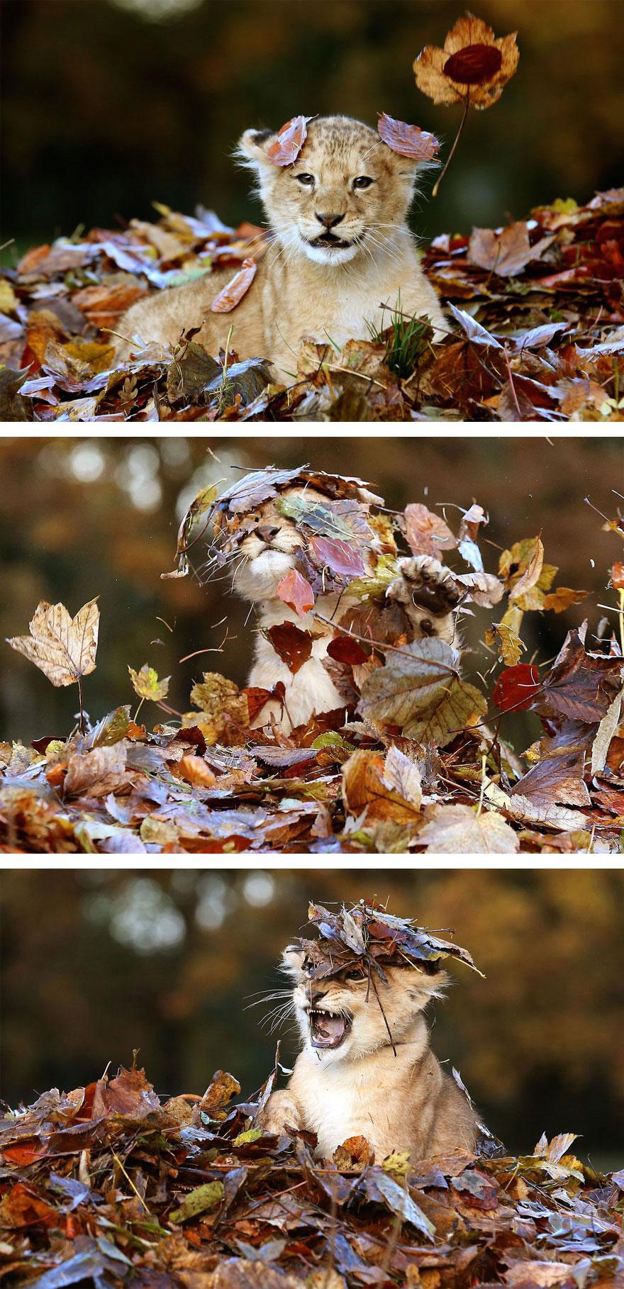 autumn-animals-2_880.jpg