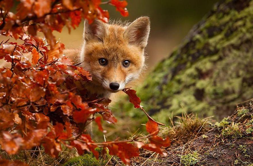 autumn-animals-3_880.jpg