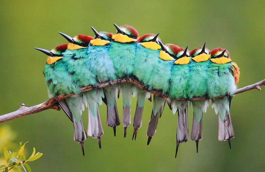 birds-keep-warm-bird-huddles-5_880.jpg