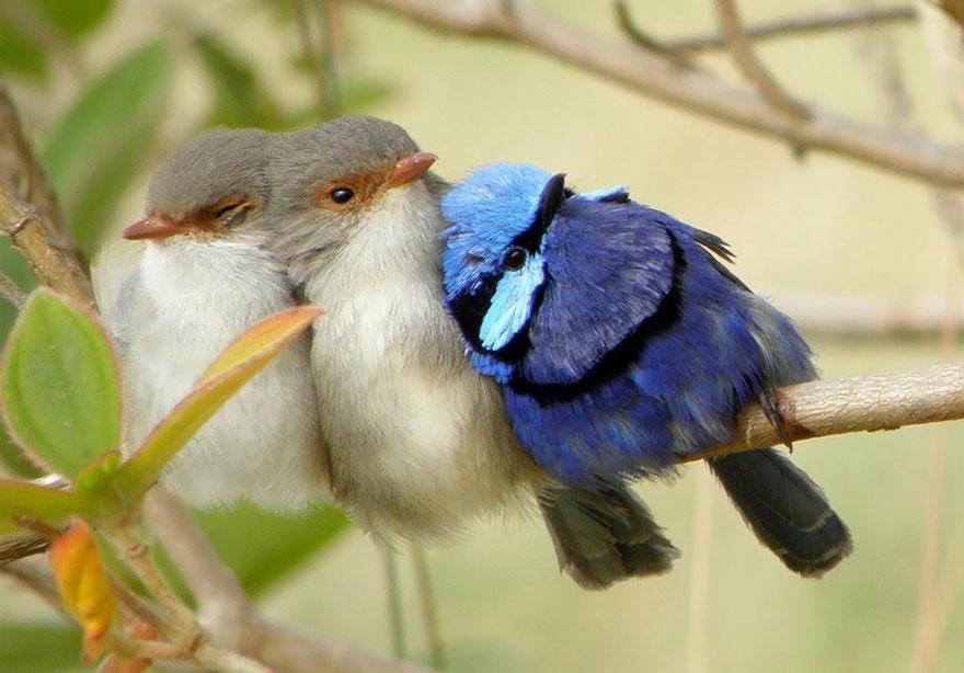 birds-keep-warm-bird-huddles-8_880.jpg
