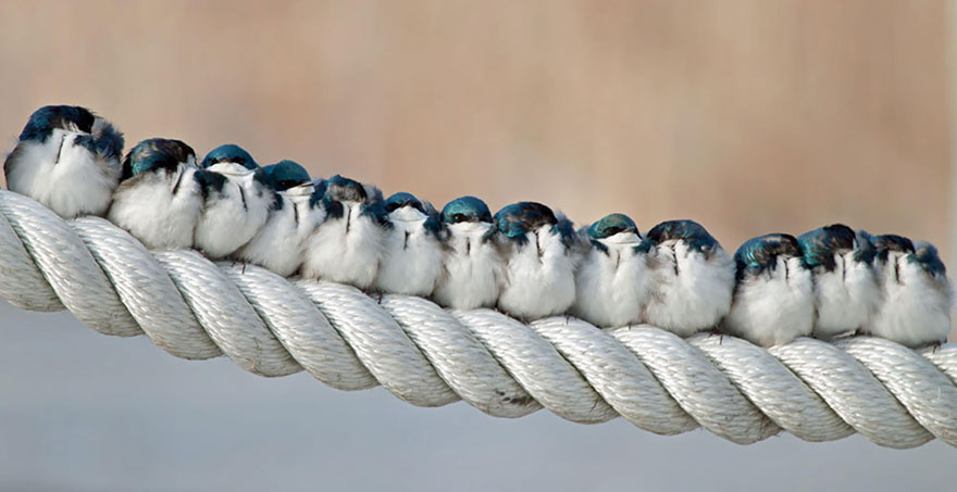 birds-keep-warm-bird-huddles-9_880.jpg
