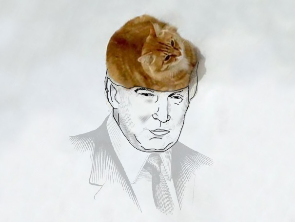 funny-doodles-on-lovely-cat-photo-donald-trump_605.jpg