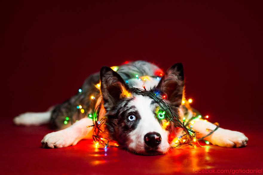 i-took-christmas-themed-dog-portraits-to-wish-you-happy-holidays_880.jpg