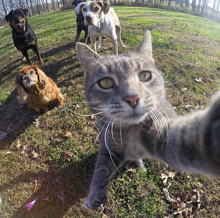 manny-cat-takes-selfies-dogs-gopro-9.jpg
