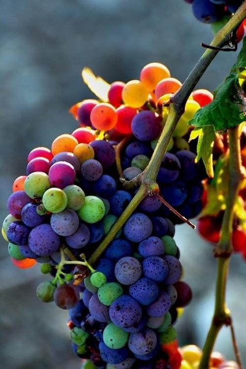 szőlős paki.jpg