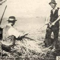 Az aratáshoz kapcsolódó szokások